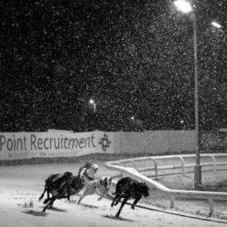 La pista per greyhound di Sunderland costringe i cani a esibirsi mentre le temperature precipitano a 1 ° C dal Baltico, che diventano rapidamente -4 ° C a causa del vento gelido!