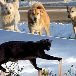 Il cane è più intelligente del gatto? Articolo tratto da Marchesini Etologia