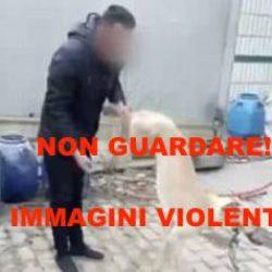 Altro episodio di violenza inaudita. Scendiamo in campo per i greyhound cinesi. Ecco come!