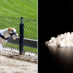 COCAINE and GREYHOUND RACING…SAME OLD STORY….