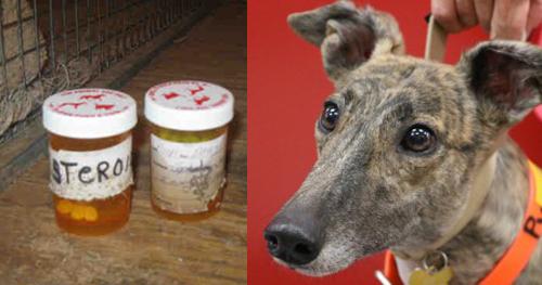 Greyhound on steroids british dragon trenabol reviews on