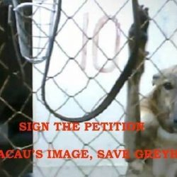 Talking about Angela Leong and our petition in order to #Save The Macau Greyhounds!