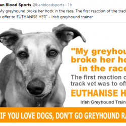 IF YOU LOVE DOGS, DON'T GO GREYHOUND RACING!