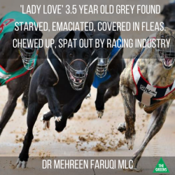 LADY LOVE – 3.5 year old – SPAT OUT by RACING INDUSTRY