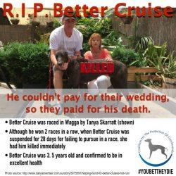 R.I.P. BETTER CRUISE – KILLED!