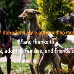 DONATIONS RAISED FOR REFUGES AND ANTIRACING CAMPAIGN GROUPS – Year 2017