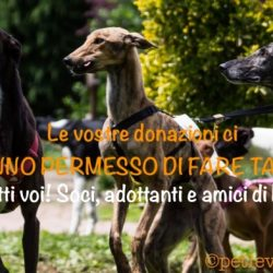 Donazioni di Pet levrieri ai rifugi e alle associazioni e gruppi antiracing – anno 2017
