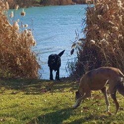 Domenica 18 Febbraio. A spasso con il cane ai Laghi Sant'Anna. Evento in collaborazione con Pet Levrieri