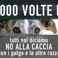 Manifestazione internazionale contro la caccia coi galgo – Verona 4 febbraio. Vi aspettiamo!