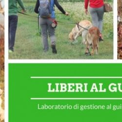 Domenica 25 Febbraio.  EduCane e SerenaMente Cane organizzano Liberi al guinzaglio. In collaborazione con Pet Levrieri.