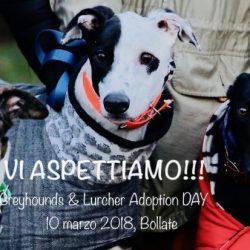 Greyhounds&Lurchers Adoption Day – 10 marzo 2018