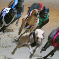 Greyhound deaths occurring at rate seen before NSW repealed ban