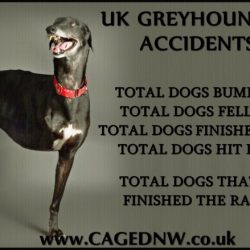 Greyhound accident figures for 2017