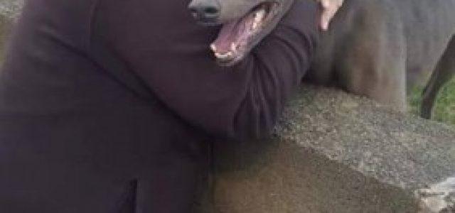 Cara Sig.ra Jayne Conway, perché continui a far gareggiare questo povero cane, visto che ha avuto così tanti problemi di salute ????