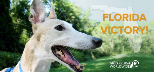 FLORIDA – Great news! One more vote and a #dog racing ban will be placed on the Novembre ballot!