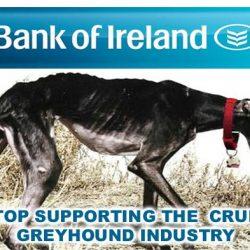 """L'""""Irish Council Against Blood Sports"""" ha lanciato un appello alla Bank of Ireland per porre fine al suo sostegno alla crudele Industria delle corse dei levrieri!"""
