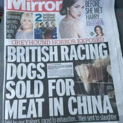 Sunday Mirror: British Racing Dogs sold for meat in China!