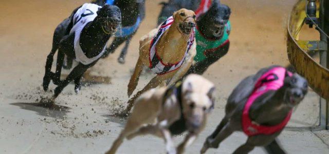 Australia – False promesse da parte dell'Industria delle corse – I greyhound continuano a morire. Già 707 vittime.