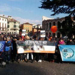 Più di 1000 persone alla manifestazione contro la caccia coi galgo – Verona, 4/2/2018