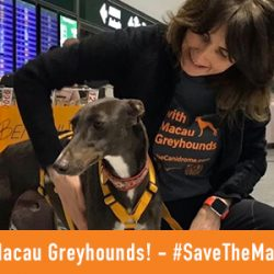 The first ever greyhounds rescued from the dog meat markets in China in Italy