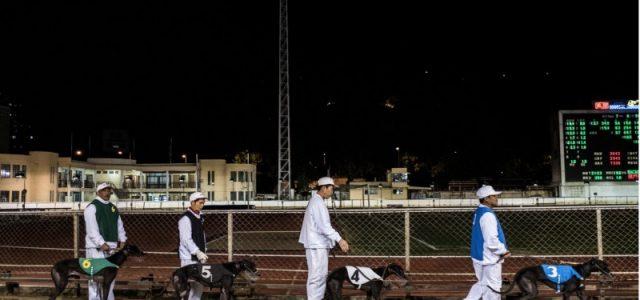 Il New York Times ha dedicato un lungo articolo ai greyhound di Macao.