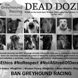 Dozzine di morti! #DogRacingKills
