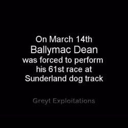 BALLYMAC DEAN destroyed at Sunderland dog track – Another life taken