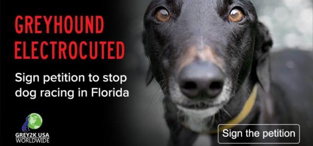 FIRMA E DIVULGA LA PETIZIONE: Aiutaci a far cessare questa crudelta, fimando questa nuova petizione per fermare le corse dei cani in Florida!