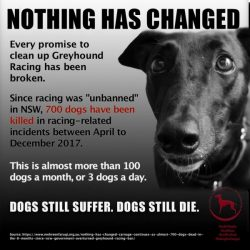 Greyhound Racing NSW is killing an average of 3 dogs per day!