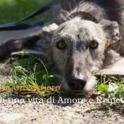 Galgos Adoption Day – 12 Maggio 2018