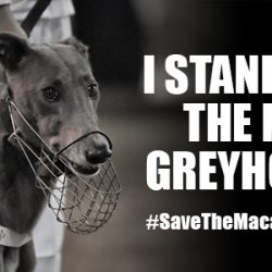 THE SAVE THE MACAU GREYHOUNDS BILLBOARD – A FOCAL POINT IN MILAN!