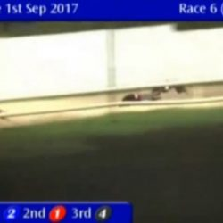 Greyhound 'turned upside down' at Tralee track – SAY NO to this cruel industry! Don't go greyhound racing!