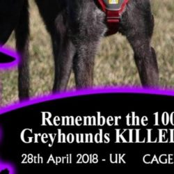 PLEASE USE THE FB FRAME FOR THE KINSLEY VIGIL FOR 1003 PLUS GREYHOUNDS KILLED IN 2017
