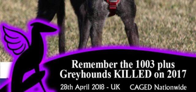 Usa il FRAME dedicato alla veglia in memoria dei greyhound uccidi nel greyhound racing!