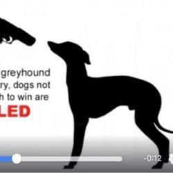 12 aprile – La fossa di Limerick – Ricordando i greyhound uccisi e gettati come spazzatura