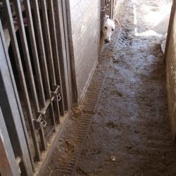 Greyhounds housed in 'unacceptable' conditions at Cottage Kennels
